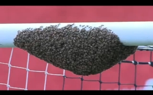 Bees on Crossbar