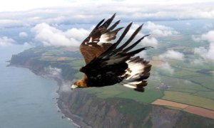 eagle-001